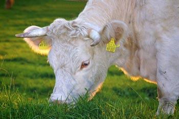 Allevamenti di bestiame